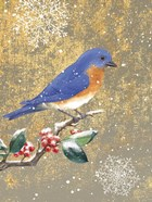 Winter Birds Bluebird Color