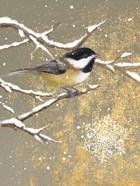 Winter Birds Chickadee Color