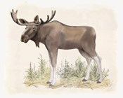 Wilderness Collection Moose