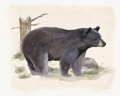 Wilderness Collection Bear