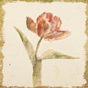 Vintage Flaming Parrot Tulip Crop