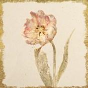 Vintage May Wonder Tulip Crop