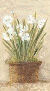 Garden White Narcissus Panel