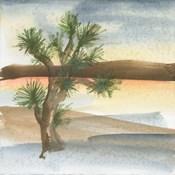 Desert Joshua Tree