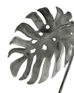 Tropical Palm IV BW