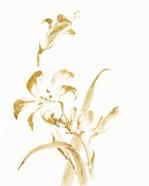 Sumi Daylily II Gold
