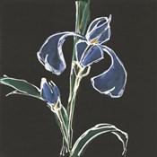 Iris on Black IV