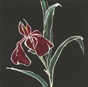Iris on Black V