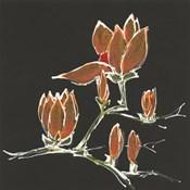Magnolia on Black IV