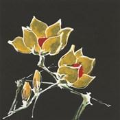 Magnolia on Black II