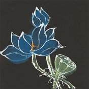 Lotus on Black VII