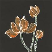 Lotus on Black IV