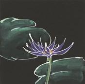 Lily on Black II