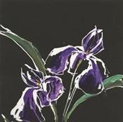 Iris on Black I