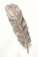 Gold Feathers V