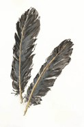 Gold Feathers IV