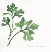 Italian Parsley II