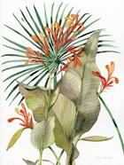 Botanical Flame Lilies