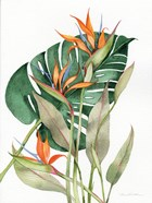 Botanical Birds of Paradise