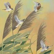 Sparrows and Phragmates Sq