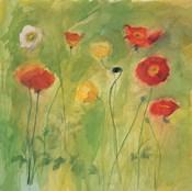 Poppies in Light Breeze