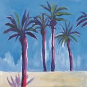 Palm Trees Morocco