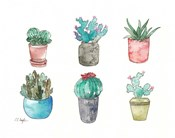 Six Cacti