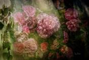 Evening Light on Roses I