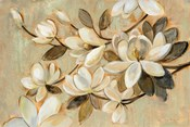 Magnolia Simplicity