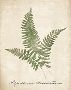 Vintage Ferns X no Border