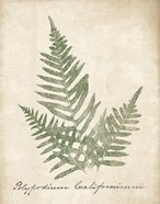 Vintage Ferns XI no Border