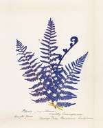 Botanical Fern IV Blue