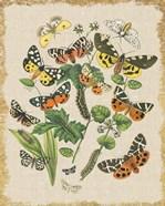 Butterfly Bouquet IV Linen