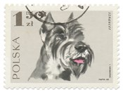Poland Stamp I on White