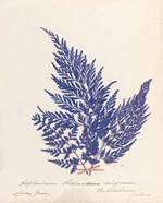 Botanical Fern XVIII Blue