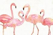 Flamingo Fever I no Splatter