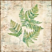 Birch Bark Ferns I