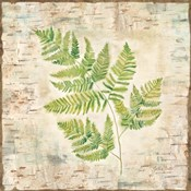 Birch Bark Ferns II