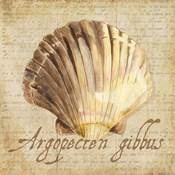 Oceanum Shells Beige V