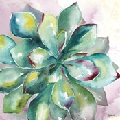 Succulent Watercolor I
