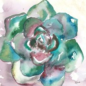 Succulent Watercolor IV