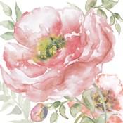 Poppy Romance I