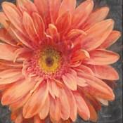 Vivid Floral II Crop