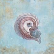 Treasures from the Sea III Watercolor