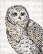 Beautiful Owls IV
