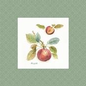 Orchard Bloom IV Border