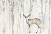 A Woodland Walk VII