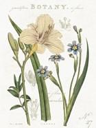 Vintage Floral II Neutral