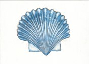 Navy Scallop Shell