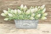 Flowers & Garden Tulips